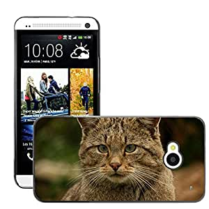 Hot Style Cell Phone PC Hard Case Cover // M00113501 Wildcat Hangover Animal Nature // HTC One M7
