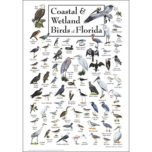Bird Large Poster - Earth Sky & Water Poster - Coastal & Wetland Birds of Florida
