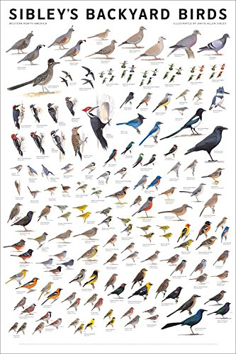 Bird Poster Print - Laminated Sibley's Backyard Birds Western North America Chart Poster Print 24x36