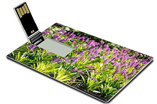 luxlady-32gb-usb-flash-drive-20-memory-stick-credit-card-size-bromeliad-image-35535524