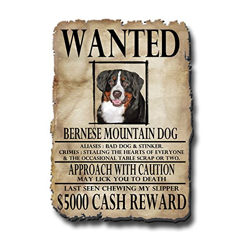 Bernese Mountain Dog Wanted Fridge Magnet