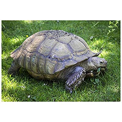 Toyensnow - African Grasses Tortoise Mix Seeds for Desert Sulcata Leopard Torts (5k Seeds /1/2 oz) : Garden & Outdoor