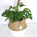 POTEY 730201 Seagrass Plant Basket Set of 3 - Hand
