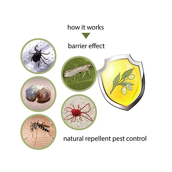 Olio di Neem Insetticida, Repellente, Disinfettante Bio Orto Giardino, Anti Zanzare, Afidi, Cimici e Insetti fastidiosi… 4 spesavip