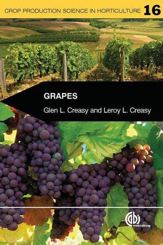 grapes holder - 6