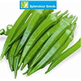 Splendour Seeds Ladies Finger Seeds Variety Arka Anamica