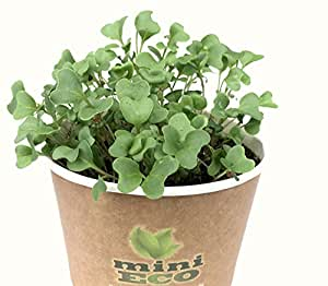 Organic Broccoli Microgreens Grow Kit. Approximately 1200 seeds, 4g. Seeds Sprouting Growing Set. Best Plant Planter Set Herbs Vegetables