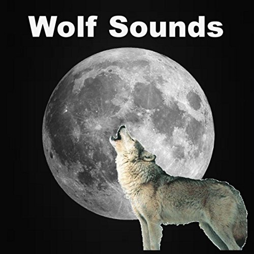 - Wolf Sounds in the Rain