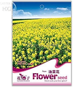 Aromatic Ornamental Patio Potted Plants Light up Garden A121 150 Seeds 2018 Canola Flower Seeds Rapeseed Edible Rape Flower Seeds