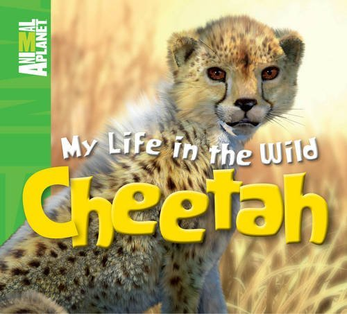 Animal Planet My Life in the Wild: Cheetah by Kingfisher (09 Cheetah)