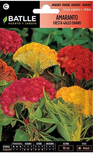 Semillas de Flores - Amaranto Cresta de Gallo - Batlle: Amazon.es: Jardín