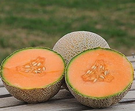 Portal Cool 10 - Semillas: Tam Uvalde Semillas de melón cantalupo - Naranja profunda, gruesa, ¡Carne con sabor muy atrevido!