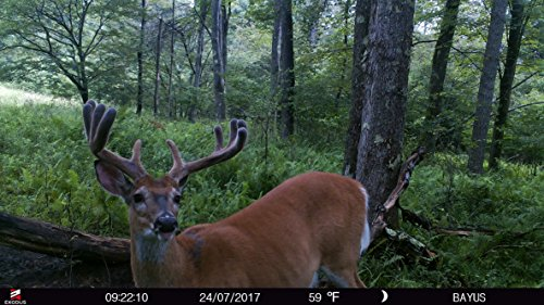 Exodus Lift II Trail Camera | .4 Second Trigger Speed, Black Flash Game Camera, Ultra HD Photos and Videos | Life's A Passion, Pursue It by Exodus Outdoor Gear (Image #6)