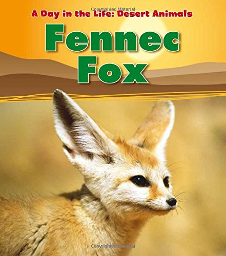 Fennec Fox  A Day In The Life  Desert Animals