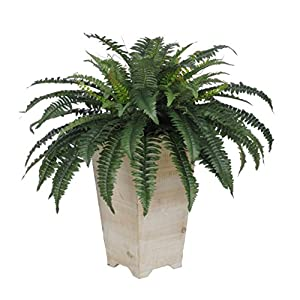 House of Silk Flowers Artificial Fern in White Wash Wood Planter 77