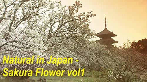 (Natural in Japan - Sakura Flower vol1: Discovery natural in Japan)
