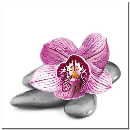 Wallpaper orchidee steine  Canvas Leinwand Bild Keilrahmenbild 35x35cm Steine Lila Blume ...