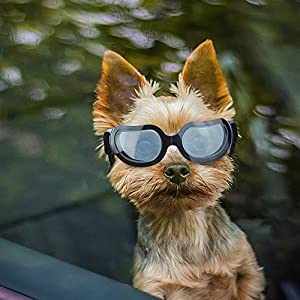 Enjoying Small Dog Sunglasses - Dog Goggles for UV Protection Sunglasses Windproof with Adjustable Band for Puppy Doggy Cat 12