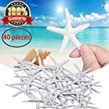 Starfish Decor Star Fish 40 Pcs White Resin Pencil Finger Starfish Decorative & Dried Starfish Ornaments for Wedding Party Christmas, Home and Crafts Project by Meiso