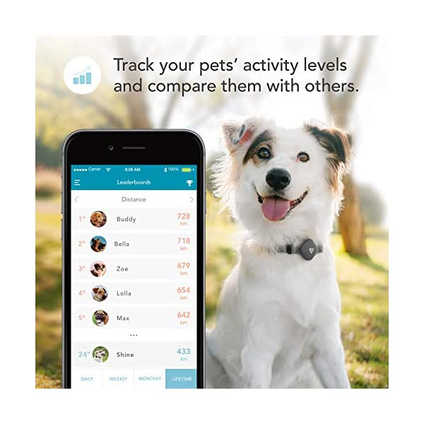 Findster Duo+ Pet Tracker Free of Monthly Fees - GPS Tracking Collar for Dogs and Cats & Pet Activity Monitor 4