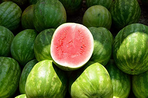 Home Comforts Canvas Print Sweet Water Melon Melon Red Food Nutrition Fruit Vivid Imagery Stretched Canvas 32 x 24