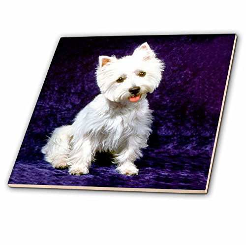 (3dRose Dogs West Highland Terrier - Westie - 6 Inch Ceramic Tile (ct_608_2))