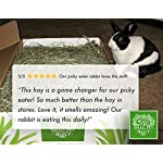 """Small Pet Select 2nd Cutting """"Perfect Blend"""" Timothy Hay Pet Food 15"""