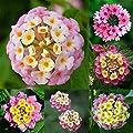 Flower Seeds Plant Seeds Grass Seeds Bonsai Seeds - Rose, Sunflower, Marigold, Alstroemeria, Bamboo, Daisy, Calendula