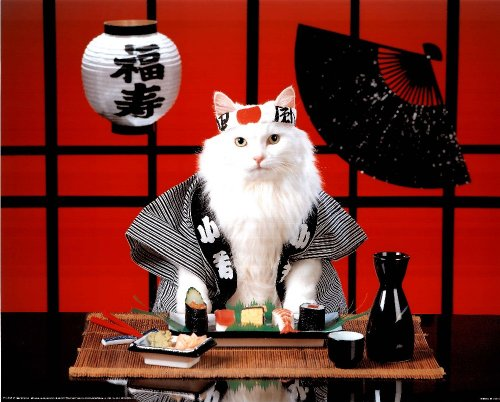 Amazoncom Sushi Cat Japanese Photo Print Poster Mini Poster Mini