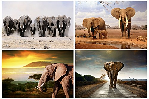 4Pcs x Poster By GLITZFAS - Elephant Animals - Art Silk Fabr