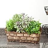 Cottage Herb Basket - Live Plant - Green Gift - Ships fast via 2-Day Air