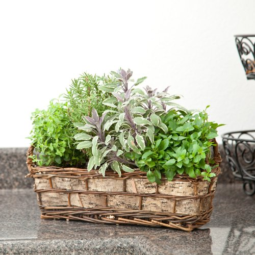 Mixed Arrangement Basket (Cottage Herb Basket - Live Plant - Green Gift - Ships fast via 2-Day Air)