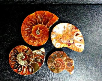 4pc Ammonite and Ammolite Cut and Polished Slices, Fossil Specimens. Wire Wrapping and Jewelry Making Fossil Gemstones and Crystals. - Amber Fossil Jewelry