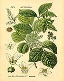 Gango Home Decor Popular Old-Fashioned Plant