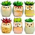 Amaze Owl Set of 6 Artificial Succulent Plants and Ceramic Planters || Fake Office Plant Pots for Indoor Decorations || Faux Succulents New Home Gift Ideas Living Room Table Shelf Desk House Decor
