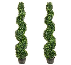 4u0027 pond boxwood spiral topiary in plastic pot green pack of 2