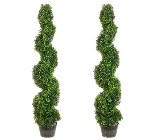 4' Pond Boxwood Spiral Topiary in Plastic Pot Green (Pack of 2)