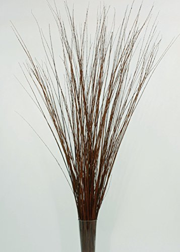 Green Floral Crafts 3-4 ft Tall, Light Mahogany Asian Willow, Bunch of 60 Tall Sticks (Vase Not Included)