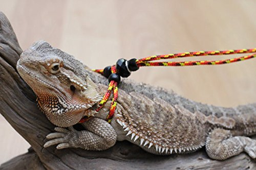 Adjustable Reptile Leash™ Green Harness Great for Reptiles or Small Pets - 100% Adjustable (6 Ft Orange) by My Reptile Rocks