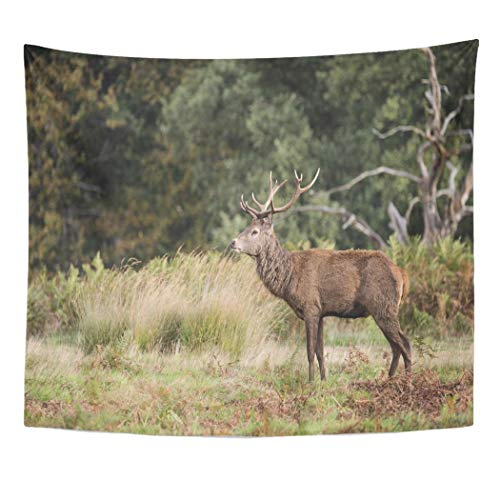 Emvency Wall Tapestry Colorful Animal Autumn Fall Landscape of Red Deer Cervus Elaphus in Forest Woodland Antler Buck Color Doe Domination Decor Wall Hanging Picnic Bedsheet Blanket 60x50 Inches