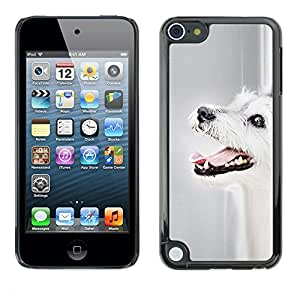 VORTEX ACCESSORY Hard Protective Case Skin Cover - parson Russell terrier dog mutt dog - Apple iPod Touch 5