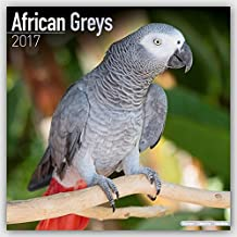 African Grey Calendar - African Grey Parrot Calendar - Parrot Calendar - Calendars 2016 - 2017 Wall Calendars - Bird Calendars - Monthly Wall Calendar by Avonside