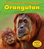 Orangutan (A Day in the Life: Rain Forest Animals)