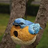 Cheap Portly Bluebird – Birdhouse