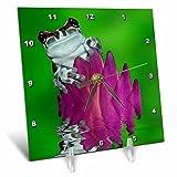 3dRose Danita Delimont - Frogs - South America, Panama. Amazon milk frog reflects in water. - 6x6 Desk Clock (dc_278322_1)