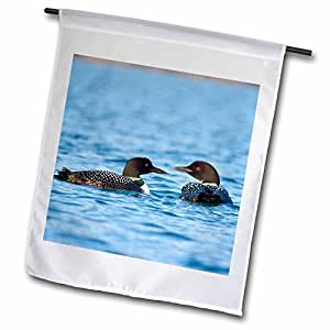 Danita Delimont - Birds - Common Loon bird, Whitefish Lake in Montana - US27 CHA1740 - Chuck Haney - 18 x 27 inch Garden Flag (fl_91840_2)