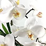 PEPPERLONELY-Brand-17-H-Artificial-Ceramic-Potted-Plant-Orchid-White