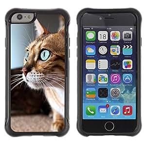 LASTONE PHONE CASE / Suave Silicona Caso Carcasa de Caucho Funda para Apple Iphone 6 PLUS 5.5 / Savannah Serengeti Blue Eyes Playing Cat