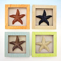 1 X 4 Starfish Shadow Boxes