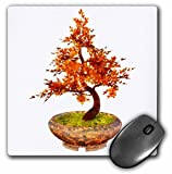 Best 3dRose Computer Pads - 3dRose Boehm Graphics Bonsai - Autumn Bonsai in Review
